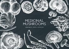 Medicinal Mushroom Illustrations Background On A Chalkboard. Hand-sketched Adaptogenic Plants Frame Design. Perfect For Recipe, Menu, Label, Packaging.