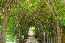 Pathway Through A Green Archway
