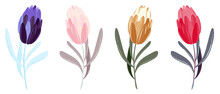 Set Of Different Colors Tulips With Leaves. Collection Of Hand-drawn Flowers For Wedding Cards, Postcards, Holidays, Mother's Day, Women's Day. Vector Tulips Illustration Isolated On White Background