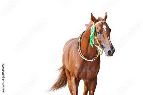 Fotografija Portrait of a horse winner in the competition with a beautiful rosette on the bridle