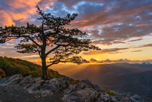 Autumn Sunset On The Blue Ridge Parkway At The Ravens Roost Overlook - Virginia - Lone Tree