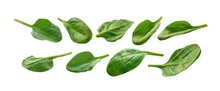 A Set Of Green Spinach Leaves. Isolated On A White Background