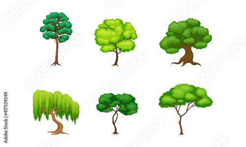 Fotografia Trees with Exuberant Green Foliage and Trunk Vector Set