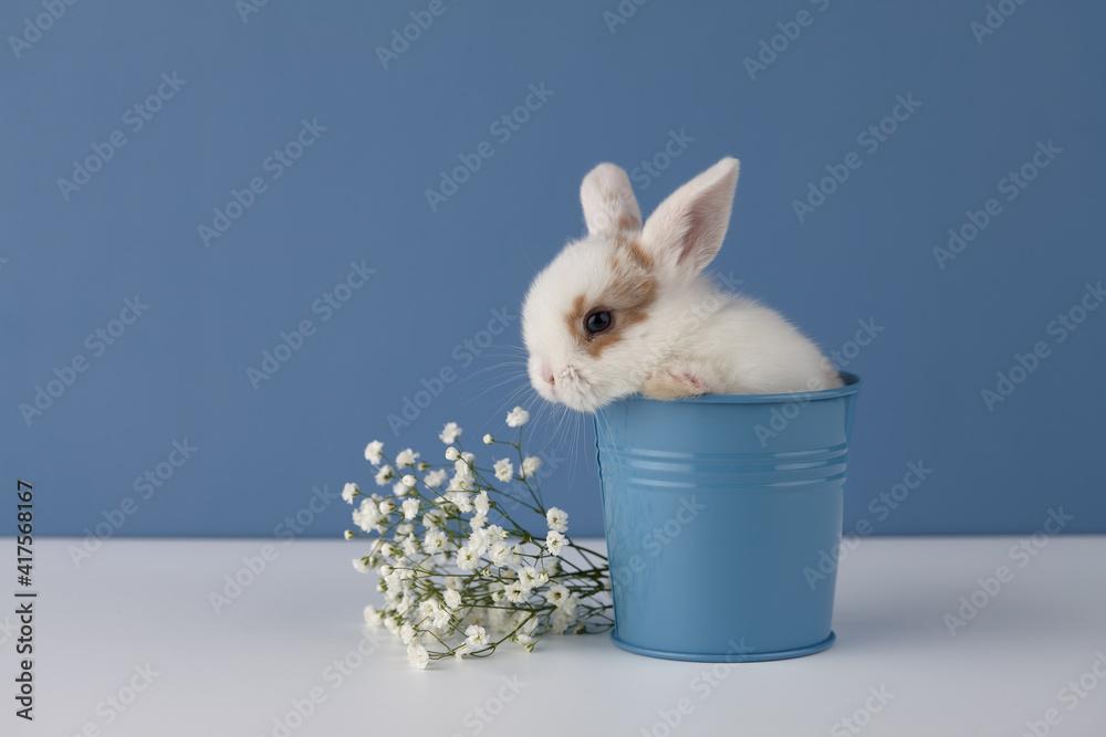 Fototapeta Baby rabbit in flower pot on blue background. Spring Easter concept.