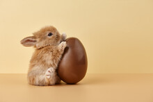 Easter Bunny Rabbit With Chocolate Egg On Beige Background
