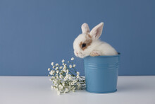 Baby Rabbit In Flower Pot On Blue Background. Spring Easter Concept.