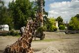 Fototapeta Zwierzęta - zwierzę zoo