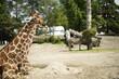zwierzę zoo