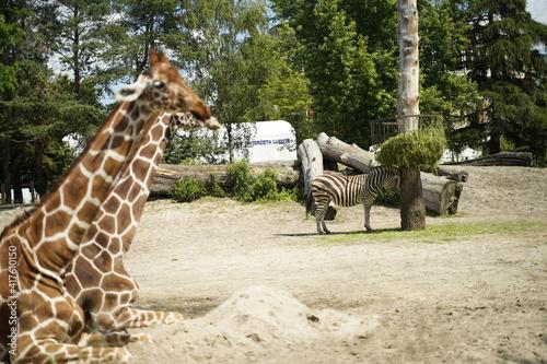 Fototapeta zwierzę zoo obraz