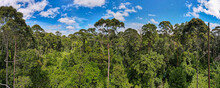 Treetops Of Dense Tropical Rainforest In The Mangrove Area Of Klias, Sabah, Malaysia. Aerial Panoramic View