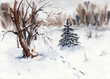 Winter Landscape. Path And Snowy Forest