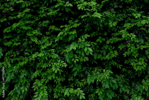 Canvas abstract green leaf texture, nature background, tropical leaf