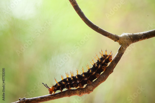Caterpillars on Unique Branch Fototapeta