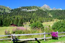 Panorama Di Montagna In Estate Con Fiori Fioriti E Prati Verdi - Sentiero Della Val San Nicolò, Trentino Alto Adige (IT)