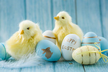 Blue, Yellow, White Easter Eggs In The Nest And Yellow Chicks On A Blue Wooden Background. The Minimal Concept Of Easter. An Easter Card With A Copy Of The Place For The Text.