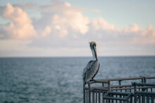 Pelican On The Pier Beach Nature Florida Pelicans Sky Sea