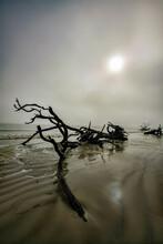 Dead Tree On Beach At Sunrise In The Fog