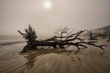 Uprooted Tree On Beach At Foggy Sunrise