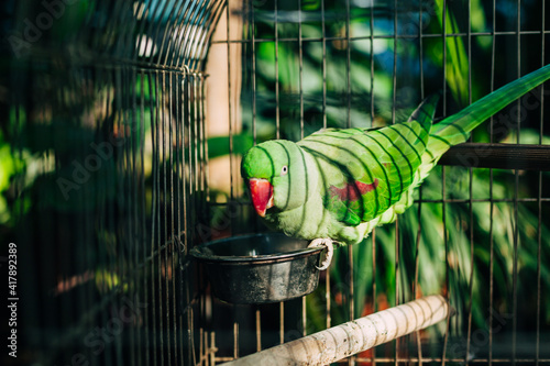 Foto Bright green parrot with red beak sitting in cage against the backdrop of green trees or tropical garden