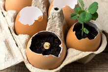 Reuse, Reduce, Recycle. Reuse Egg Tray And Eggshells To Grow Plants. The Concept Of Ecology, Eco-products, The Preservation Of The Earth