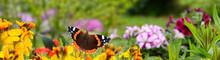 Schmetterling 818