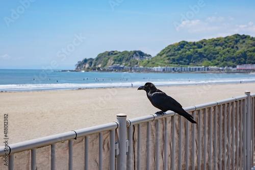 Fototapeta premium Black crow with the coast of the Sea