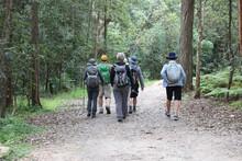 Blackbutt Creek Track, Gordon, Sydney, NSW, Australia