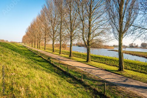 Photo Long row of tall and bare trees along a country road at the foot of a Dutch dike