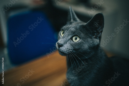 Portrait of a cat indoors Fototapeta