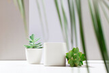 White empty boxes of different forms on light backdrop with shadow and succulent plants.