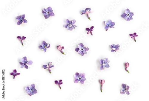 Fototapeta Violet blue flowers lilac ( Syringa vulgaris ) on a white background