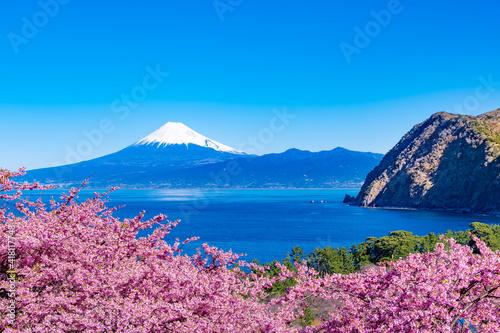 Foto 静岡県沼津市井田 富士山と河津桜