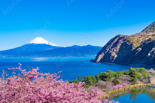 Papel de parede 静岡県沼津市井田 富士山と河津桜