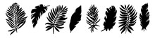 Vector Set Of Black Silhouettes Of Tropical Leaves. Collection Of Exotic Leaves Of Monstera, Palm, Banana Isolated On A White Background. Large Vector Collection Of Plant Silhouettes  Elements.