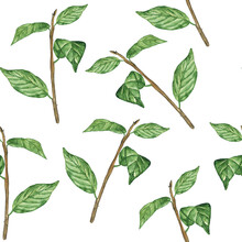 Watercolor Branch With Leaves On White Background. Seamless Pattern Of Foliage Hand Drawing Illustration. Perfect For Textile, Fabric And Print.