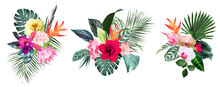 Exotic Tropical Flowers, Orchid, Strelitzia, Hibiscus, Protea, Anthurium, Palm
