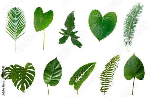 Fototapety, obrazy: Set of  Tropical green leaves isolated on white background.
