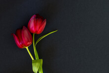 Funeral Concept With Two Tulip Red Flowers Isolated On Black Background