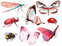 Set Of Insects. Clipart. Watercolor