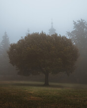 Tree On The Grassy Ground In The Foggy And Creepy Park
