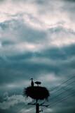 Fototapeta Na sufit - Bociany, burza