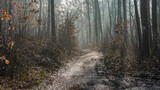 ścieżka w lesie zimą w mglisty poranek na Śląsku w Polsce