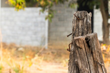 The Wooden Posts Made A Fence In The Garden Where Nails Were Nailed And Were Long-lived.