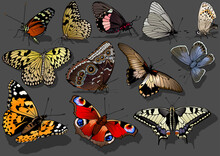 Set Of Brightly Colorful Butterflies Isolated On A Dark Background - Illustration With Shadow On The Ground, Vector