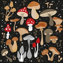 Mushroom Set Of Vector Illustrations Isolated On Black. White Mushroom, Chanterelles, Honey Agarics, Champignons, Fly Agarics, Morels. Set Of Ingredients For The Witch's Potion. Cartoon Style.