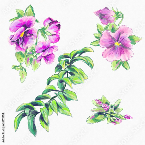Slika na platnu Watercolor greeting card elements pink violas and branch isolated on a white bac
