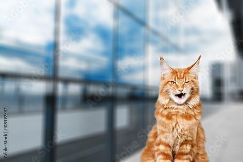 Fotografija Adorable.