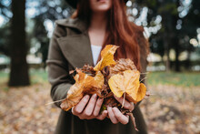 Young Woman Holding Autumn Leaves In Park, Close Up Of Hands