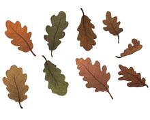 Set Of Oak Leaves