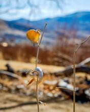 Dried Seedpod In The Sun